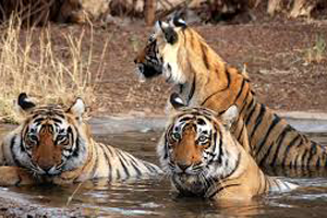 Travel insurance for Ranthambore national park
