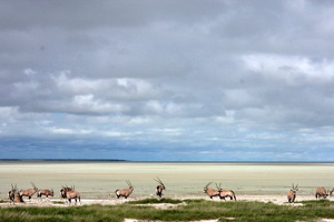 Travel insurance for Etosha National Park