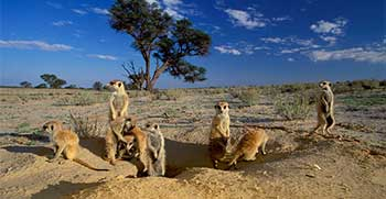Travel insurance for Kgalagadi Transfrontier Park