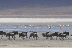 Travel insurance for Ngorongoro National Park