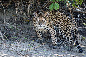 Travel insurance for Pantanal