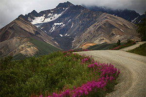 Travel insurance for Denali National Park Preserve