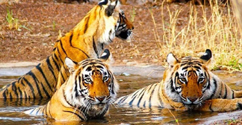 Travel insurance for Kanha Tiger Reserve